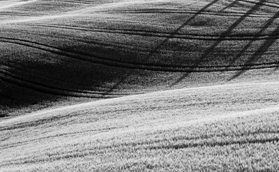 Cypress Shadows - Val d'Orcia