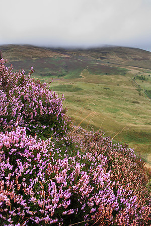 Fan Frynych Nature Reserve