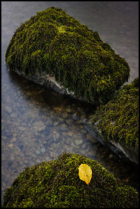 Moss on rocks, Ullswater