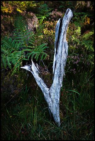 Beinn Eighe Forest