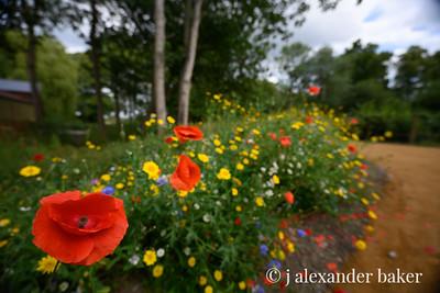 Wildflower border, Christ Church College Gardens, Oxford