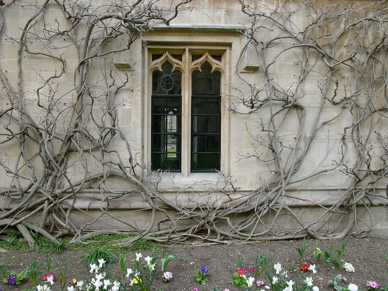 Artistic Tree Plant