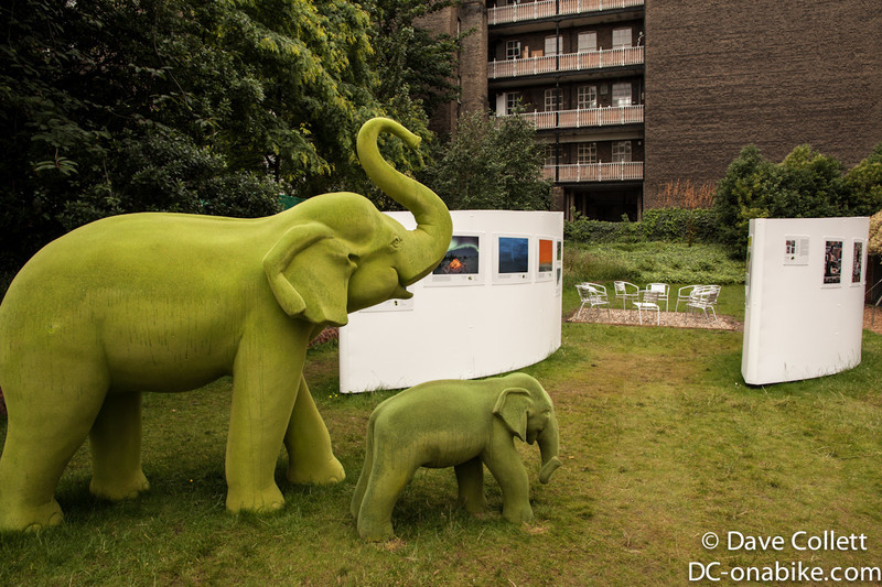 Elephants at the Royal Geographic Society