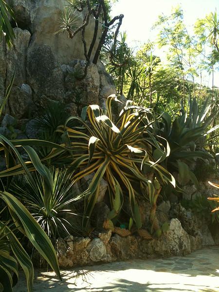 Jardin Exotiques