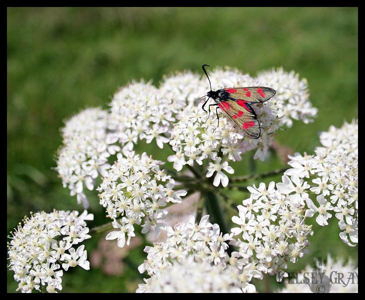 My little bug friend.