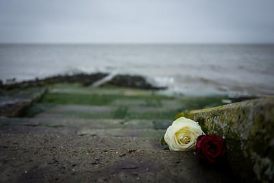 Flowers at the North Coast Wilhelmshaven