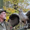 Havikarend; Falconry; Valkenier; Fauconier; Hieraaetus fasciatus; Habichtsadler; Bonelli's Eagle; Aigle de Bonelli; Zoo