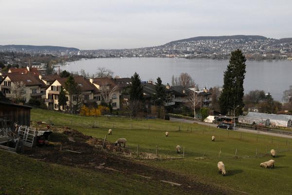 Overlooking Zurichsee