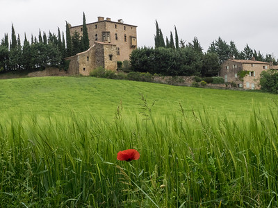 Poppy and residence in SW France