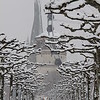 Dusseldorf, snowy tree avenue
