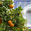Spanish oranges, Cadiz