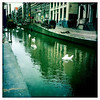 Swans in the red light district, Amsterdam, June 17, 2011.