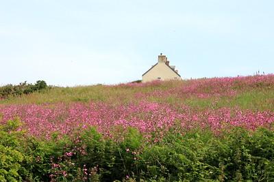 Cornish countryside, England