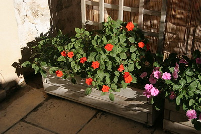 Impatiens in Provence