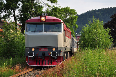 749 240 hiding in the undergrowth at Žacléř (06.07.2013)