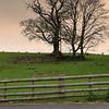 Enchmarsh Farm - Evening Walk