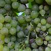 A regional white wine grape.