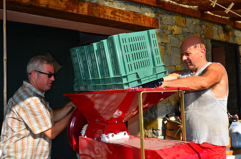 A grape crushing machine. Instead of stomping, we fed the grapes through this machine. It broke the skins and stripped away the stalks.