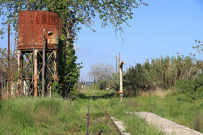 Looking West along the track at Achaia - the vegetation is starting to take over after 3 years without a regular service - 11/04/13.