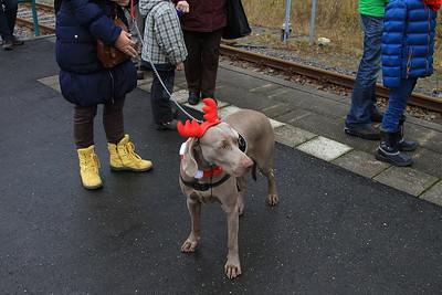 Christmassy dog - 06/12/14.