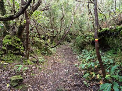 Serreta: http://trails.visitazores.com/en/trails-azores/terceira/serreta