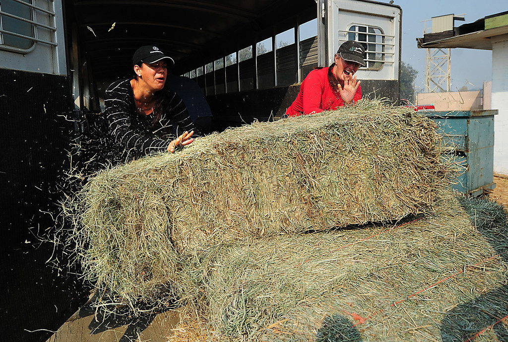 . VALLEJO, CA- OCT. 10, Volunteers attempt to unload bales of hay at the large animal eveacuation center.  (Chris Riley/Vallejo Times-Herald)