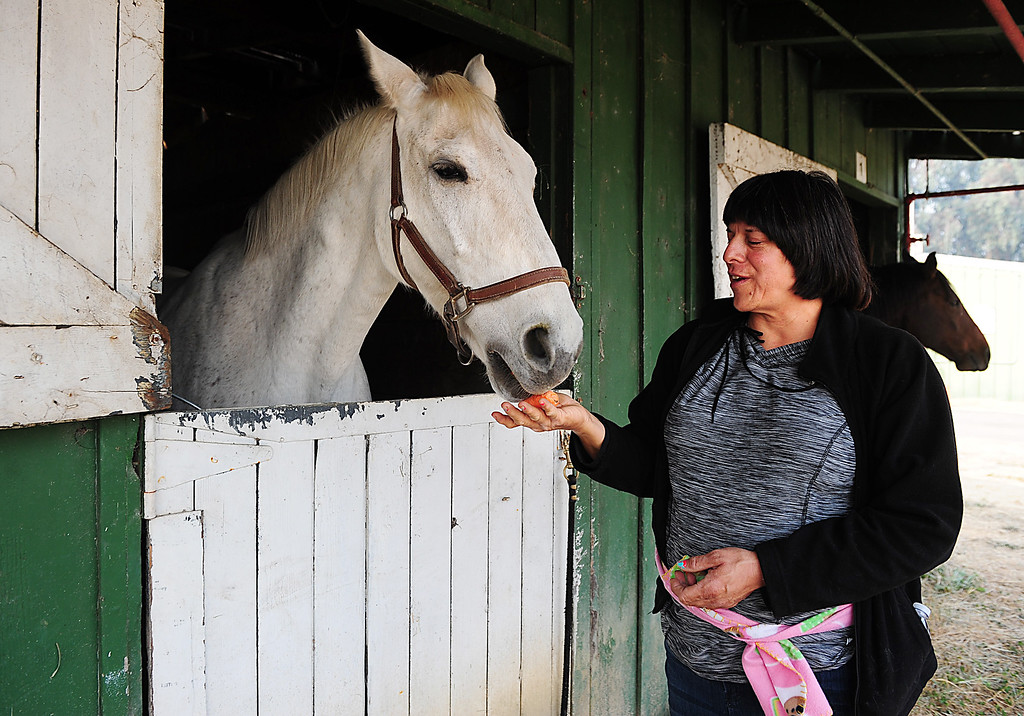 . VALLEJO, CA- OCT. 10, Doreen Lewis feeds carrots to an evacuated horse at the Solano County Fairgrounds.  (Chris Riley/Vallejo Times-Herald)