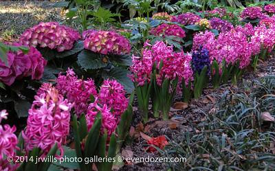 Hyacinths & Hydrangea