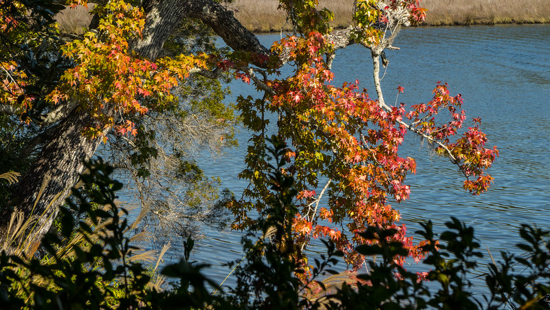 """This is """"Fall Leaves"""" in south Alabama"""