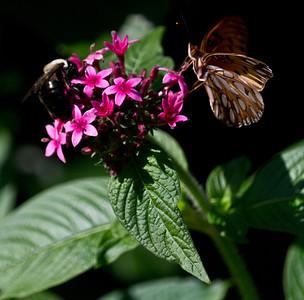 Sharing the nectar buffet.
