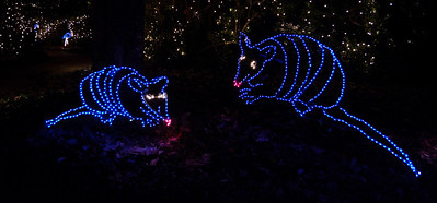 We didn't do armadillo light displays where I was raised — in Pennsylvania.