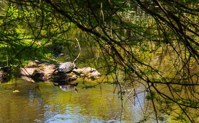 Big old turtles everywhere