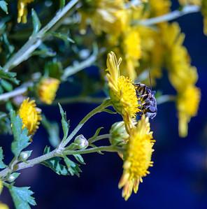 Bugs-n-Blooms