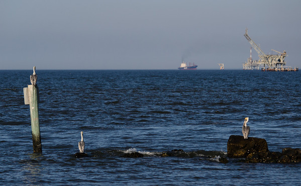 It looks like the elders are keeping an eye on what's happening in the gulf.