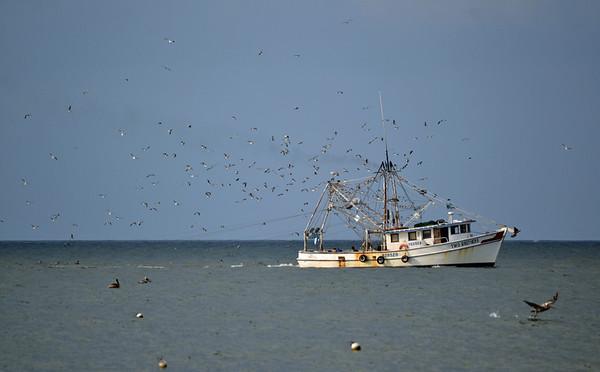 More shrimping