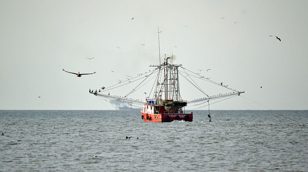 A different perspective. I like the way the pelican's wings mimics the rigging.