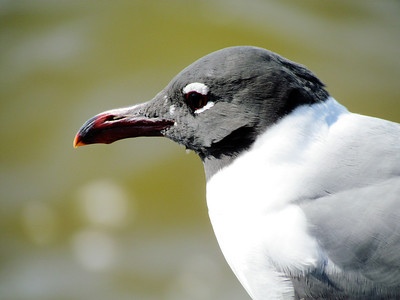 I did not know they sported a hole in their beak.
