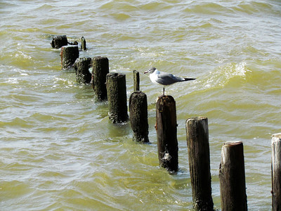 Too bad there weren't more birds. Oh well, the pilings are neat.