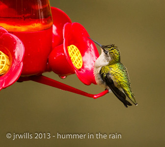 If not for continuous (or burst) shooting mode, capturing a hummingbird's blink would be a little difficult.