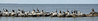 I shot the four photos for this panorama which includes birds in motion from moving ferry with a handheld camera. Under the circumstances, I think it ain't too shabby.