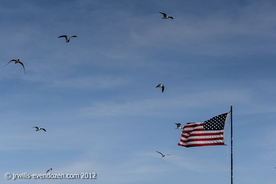 I just like the birds and the flag.