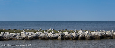 Coming into the boat slip on the Dauphin Island side of Mobile Bay.