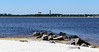Looking across the bay to NAS Pensacola and the Pensacola Lighthouse * (click link below)