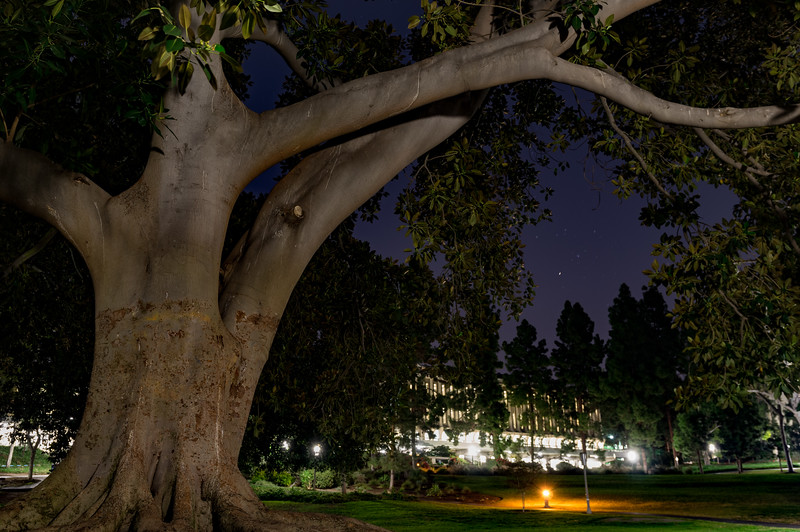 UCI Paths at Night