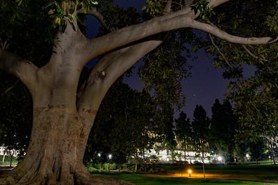 UCI Paths at Night