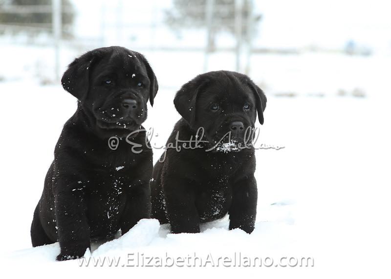 Snow Pair