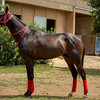 HORSES04