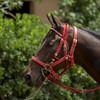 HORSES24