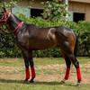 HORSES09