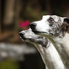 WHIPPETS02